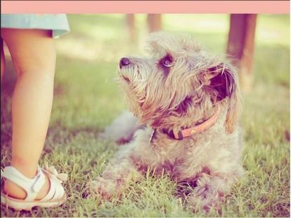 Stringently Enforced Liability: Dog-Bite Regulation